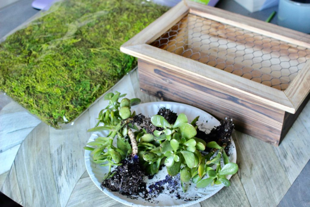 Craft Room De-Stash Challenge-Succulent Garden Our Crafty Mom