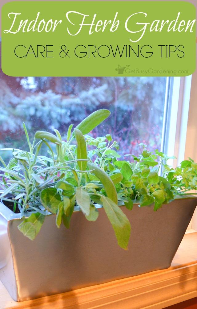 Indoor-Herb-Garden-Growing-Tips-Get-Busy-Gardening-HMLP-124-Feature-vert.jpg