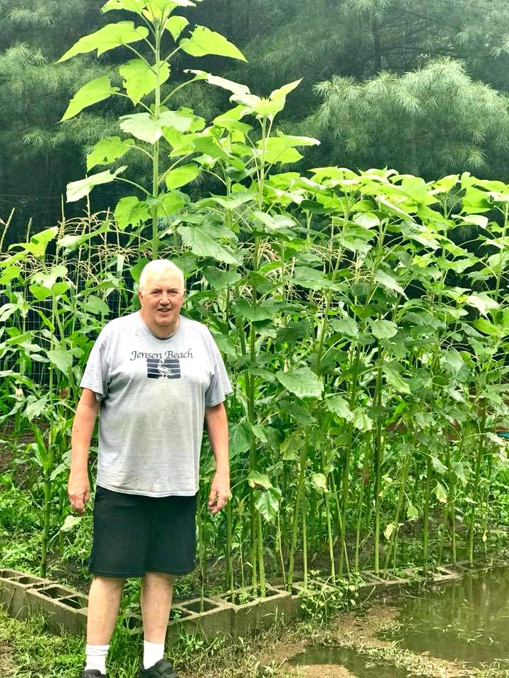 Dad and sunflower garden