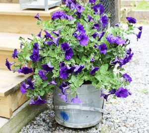 washtub turned garden planter our crafty mom