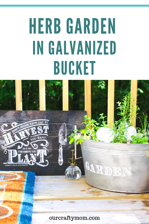 herb garden in a galvanized bucket