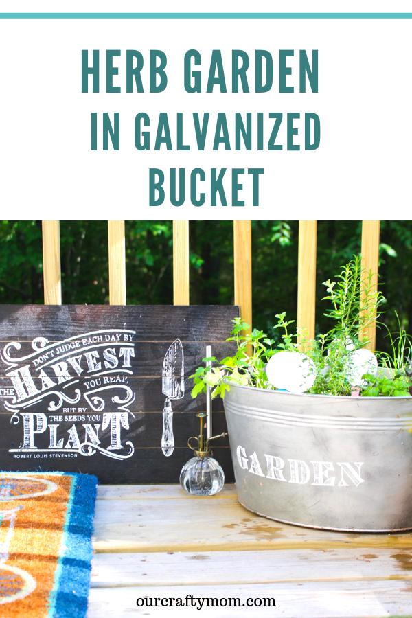 herb garden in a galvanized bucket