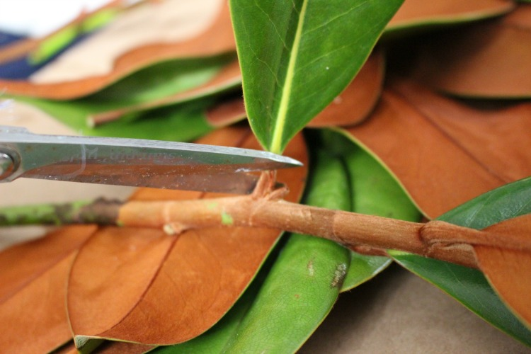 magnolia leaves being cut
