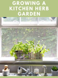 5 tips for kitchen herb garden