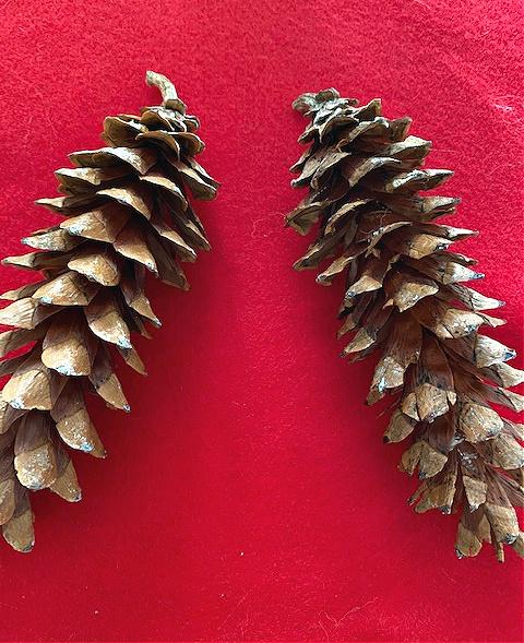 pine cones on red felt