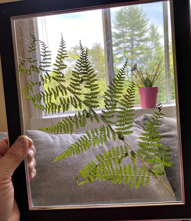 fern glued to glass