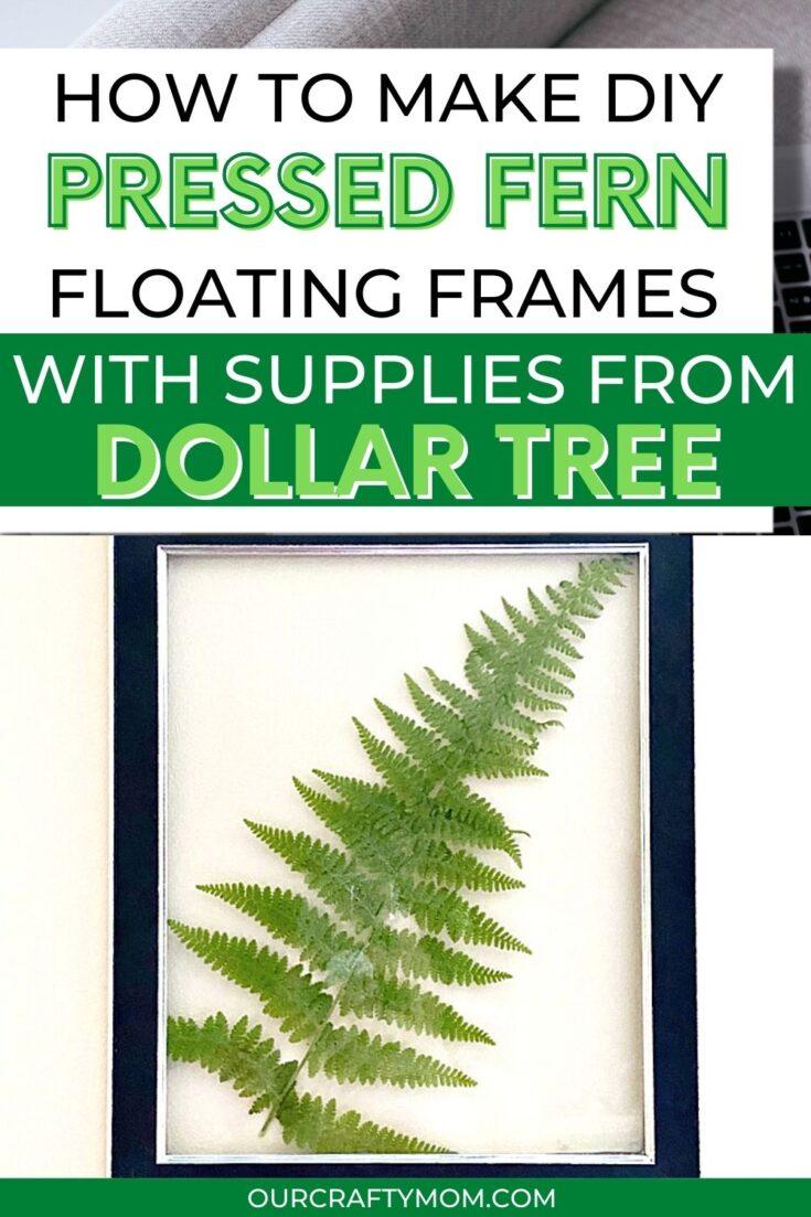 pressed fern floating frame pin image