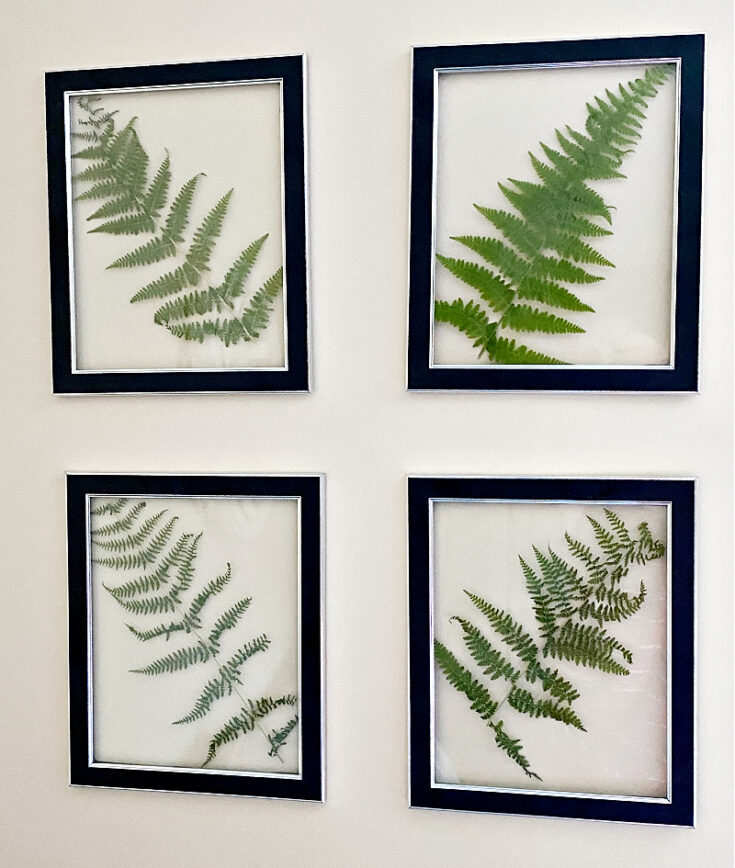 diy pressed fern art