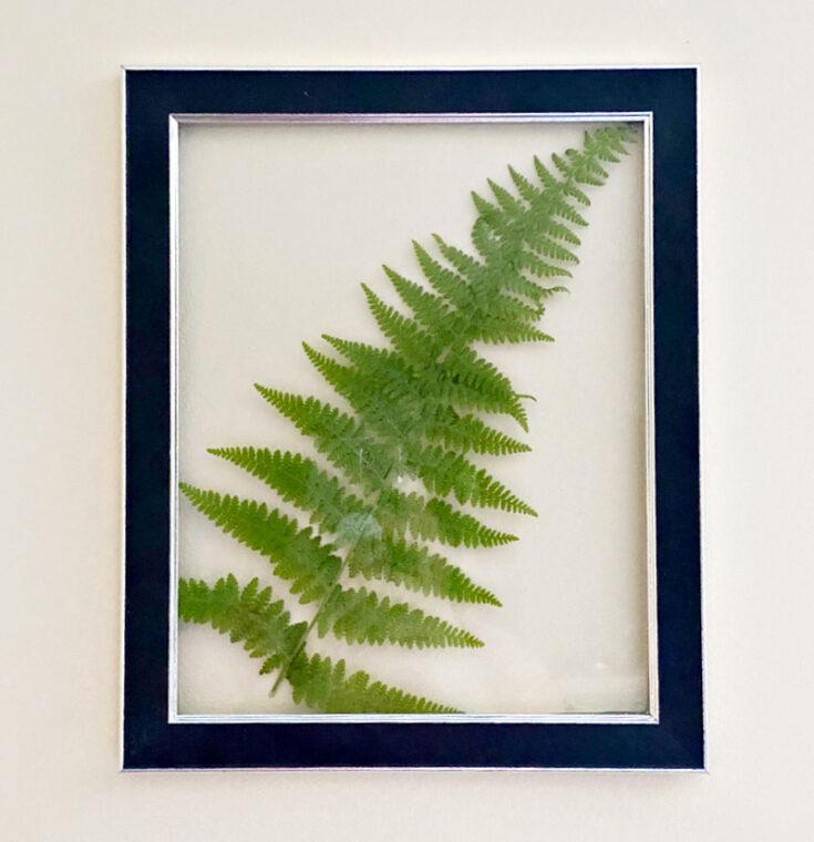 large fern glued to frame
